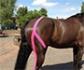 'El vendaje neuromuscular o kinesiotaping es una técnica de bajo coste, con escasas complicaciones y fácil de aplicar en caballos'