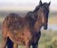 Aprobada una resolución europea para mejorar el bienestar de los caballos, burros y mulas