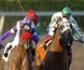 La importancia del veterinario en la salud de los caballos de competición