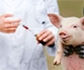 España reduce un 14 por ciento el uso de antibióticos en Veterinaria