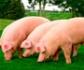 Se pone en marcha un plan europeo para la evaluación del bienestar de los animales de granja
