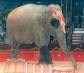 El rechazo a los circos con animales se extiende por España en los últimos años