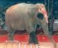 Aragón también prohíbe el uso de animales salvajes en los circos