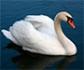 Informan de un foco de gripe aviar altamente patógena en Austria