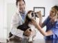 Hoy se abre el plazo para solicitar las becas de formación práctica especializada para el Hospital Clínico Veterinario Complutense