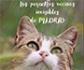 Madrid Salud: plan municipal de control y gestión de colonias felinas urbanas
