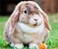 El reto de la evaluación y control de la analgesia en conejos