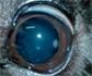 Edema corneal en perros: causas y tratamiento