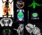 II Edición del 'Workshop de introducción a la imagen molecular pre-clínica y su aplicación a la investigación biomédica'