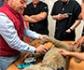 Diploma en cardiología clínica en pequeños animales, en la facultad de veterinaria de la Universidad Complutense de Madrid