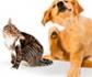 Abierto el plazo de inscripción para la quinta edición del 'Curso de actualización en dermatología en pequeños animales' de Colvema.¡No te quedes sin plaza!