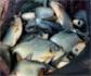 Curso de producción y sanidad de animales acuáticos, en la sede de Colvema