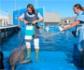 Veterinarios españoles desarrollan una nueva tecnología que permite saber la edad en delfines de forma menos invasiva