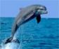 El secreto de los delfines para respirar bajo el agua