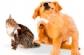 Colvema lanza la quinta edición del 'Curso de actualización en dermatología en pequeños animales'