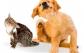 Prurito en pequeños animales: de la patogenia al tratamiento