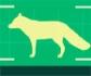 OIE: Directrices para trabajar con mamíferos silvestres en libertad, durante la pandemia de Covid-19