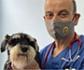 Dirofilariosis: El 70 % de dueños de mascotas no saben que viven en una zona endémica
