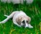 Posicionamiento del GRETCA sobre la teoría de la dominancia en perros
