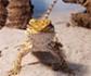 La administración de lidocaína neuraxial mejora la anestesia de los dragones barbudos