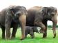 India abre su primer hospital para elefantes para luchar contra el maltrato de estos animales y procurar su bienestar