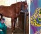 La facultad de veterinaria de la UCM, lanza una encuesta para un estudio epidemiológico, sobre la situación de los veterinarios respecto al Covid 19