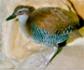 Lista de especies amenazas actualizada: 10 casos positivos y 73 negativos