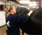 Los fisios veterinarios de equinos se mantienen firmes en sus reivindicaciones, pese a la oposición del Consejo General de Colegios de Fisoterapeutas