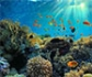 Salvaguardar los ecosistemas marinos, otra labor esencial de los veterinarios
