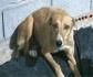 El fin del periodo de caza, supone el tercer motivo de abandono de perros en España