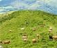 Provacuno muestra cómo el sector del vacuno de carne ayuda a conservar el medio ambiente
