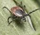 Medidas de prevención contra las garrapatas, que transmiten enfermedades como la de Lyme que puede ser mortal para los humanos