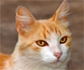 Acaros en gatos: eficacia del tratamiento frente a cheyletiellosis felina