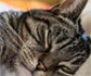 La FVE se posiciona sobre el uso de cannabioides en veterinaria