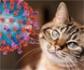 Un medicamento veterinario podría ser efectivo para el tratamiento de la COVID-19