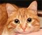 Siete rasgos de personalidad y comportamiento identificados en gatos, con diferencias significativas observadas entre razas