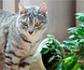 Plantas seguras para gatos ¿Qué plantas tener y cuáles no en casa?