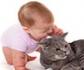 La convivencia con gatos previene la aparición de asma en los recién nacidos, según un estudio