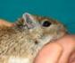 El Gobierno aprueba un real decreto que mejora la transparencia en el uso de animales para actividades científicas y docentes