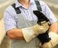 Covid-19: La OIE lanza guía para trabajar en granjas de animales susceptibles