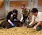 Estudiantes de medicina de Harvard, realizan rotaciones en zoológicos con el propósito de reforzar la idea que animales y humanos comparten el mismo entorno