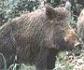 Nuevos casos de peste porcina africana en China y en Rumanía