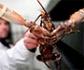 Suiza prohíbe cocinar las langostas tirándolas en agua hirviendo, tras revisar su legislación en materia de protección animal