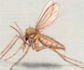 Investigadores detectan una mayor capacidad infectiva de las muestras de Leishmania aisladas en 2012, en el grave brote de leishmaniasis en humanos de Fuenlabrada