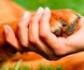 Veterinarios y abogados colaboran por la protección y bienestar animal