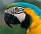 Zoonosis: siete de cada diez enfermedades se transmiten ya de animales a humanos