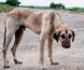 El maltrato animal ya es un delito federal en Estados Unidos
