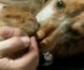 Gracias a la colaboración ciudadana, han sido detenidas 10 personas en Málaga por maltratar a 16 perros en fincas y viviendas