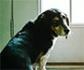 Expertos del colegio de abogados de Barcelona, analizan los derechos de las mascotas en los desahucios