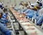 Aplicación de la nueva normativa relativa a los mataderos avícolas: control oficial en los mataderos de aves
